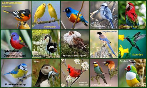 Птицы смайлики гифки анимации