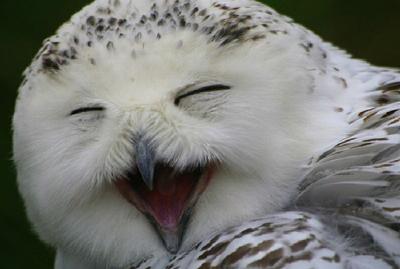 Открытка. Международный день птиц! <b>Смеющаяся</b> совушка гифка анимация