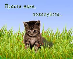 Прости меня, <b>пожалуйста</b>! Котенок в траве гифка анимация