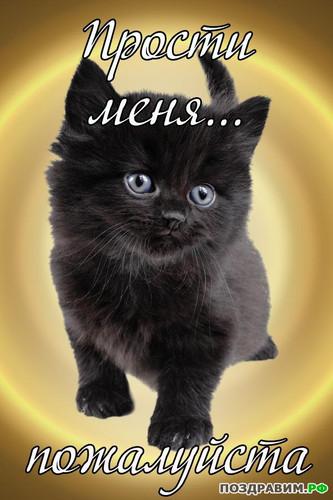 Прости меня <b>пожалуйста</b>! Котенок просит прощения! гифка анимация
