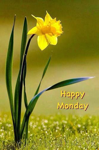 <b>С</b> <b>понедельником</b>! Прекрасный цветок гифка анимация