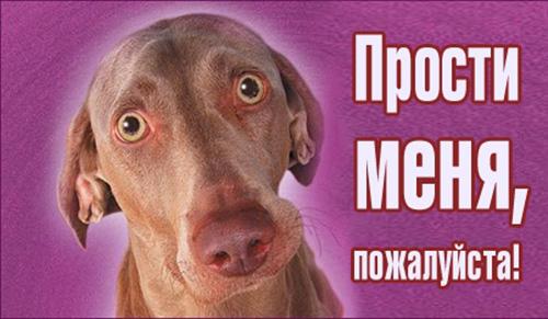 Прости меня, <b>пожалуйста</b>! Пес с круглыми глазами гифка анимация