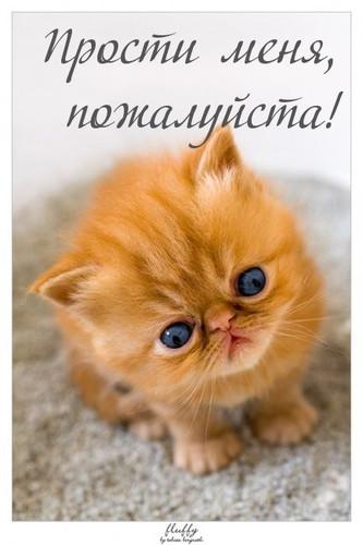 Прости меня, <b>пожалуйста</b>! рыжий котенок гифка анимация