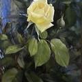 Белая Роза. Работа <b>Юрия</b> Яроша гифка анимация