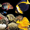 <b>Рыбки</b> плавают в темном <b>аквариуме</b> гифка анимация