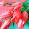 Розовые тюльпаны на розово-<b>зеленом</b> <b>фоне</b> гифка анимация