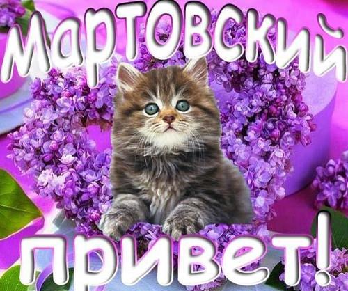 <b>Открытка</b>. Мартовский привет! Котенок <b>среди</b> цветов гифка анимация