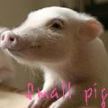 Маленький <b>поросенок</b>, small pig гифка анимация