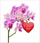 На <b>орхидее</b> сердечко с надписью Я люблю тебя! гифка анимация