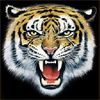 Морда большого рыжего <b>тигра</b> <b>с</b> открытой пастью гифка анимация