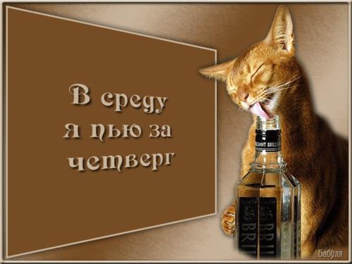<b>Открытки</b>. В <b>среду</b> я пью за четверг! Кошка с бутылкой гифка анимация