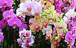 <b>Орхидеи</b> разные гифка анимация