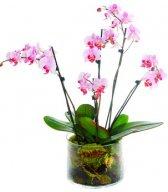 <b>Орхидея</b> розовая гифка анимация