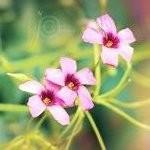 <b>Цветы</b> <b>полевые</b> розовые гифка анимация
