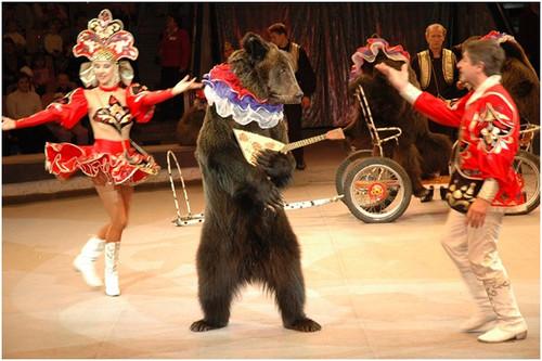 Открытки. Всемирный день цирка. Медведь на арене смайлик гифка анимация