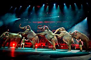 Открытки. Всемирный день цирка. Номер <b>со</b> <b>слониками</b> гифка анимация