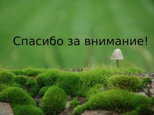 Спасибо за внимание! <b>Фон</b> -<b>зеленый</b>. Трава и гриб гифка анимация