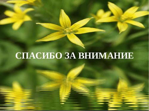 Спасибо за внимание! <b>Фон</b> <b>зеленый</b> с желтыми цветами гифка анимация