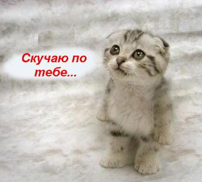 Грустно Открытки. Скучаю по тебе. котенок с грустными глазами смайлик гиф анимация