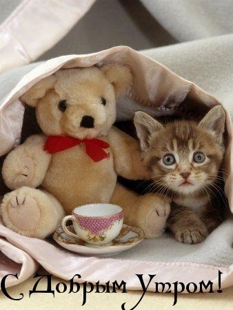 Картинка. <b>С</b> добрым утром! Котенок <b>с</b> <b>медвежонком</b> гифка анимация