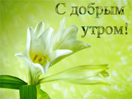 С добрым утром! Белые цветы на <b>зеленом</b> <b>фоне</b> гифка анимация