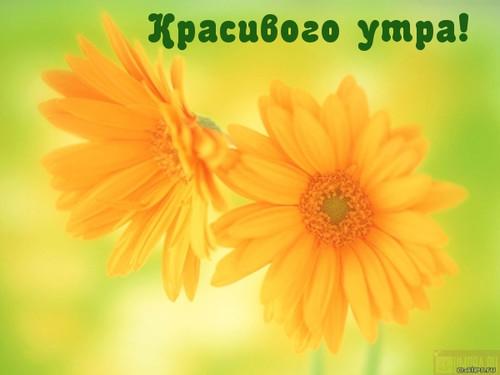 Красивого утра! Желтые цветы на <b>зеленом</b> <b>фоне</b> гифка анимация