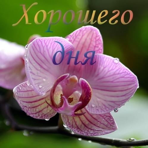 Хорошего дня! Цветок <b>орхидеи</b> гифка анимация