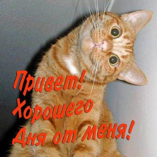 <b>Привет</b>! Хорошего дня <b>от</b> <b>меня</b>! Рыжий кот гифка анимация