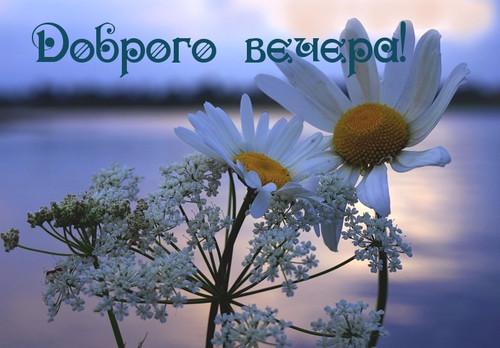 Доброго вечера! <b>Полевые</b> <b>цветы</b> гифка анимация