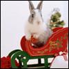 <b>Новогодний</b> заяц в красных санях гифка анимация