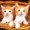 <b>Котята</b> недоверчиво смотрят гифка анимация