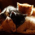 <b>Котята</b> спят гифка анимация