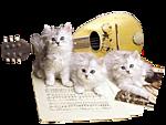 <b>Котятки</b> охраняют музыкальный инструмент гифка анимация