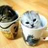 <b>Котята</b> сидят в кружках гифка анимация