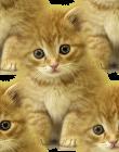 <b>Котята</b> рыжие гифка анимация
