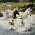 <b>Лошади</b> входят в реку гифка анимация