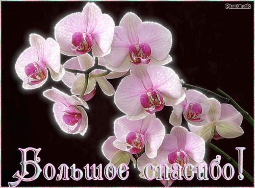 Большое спасибо! <b>орхидеи</b> гифка анимация