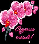 Огромное спасибо! <b>Орхидеи</b> гифка анимация