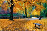 Осенние листья укрыли дорожки парка. <b>Светлая</b> осень гифка анимация