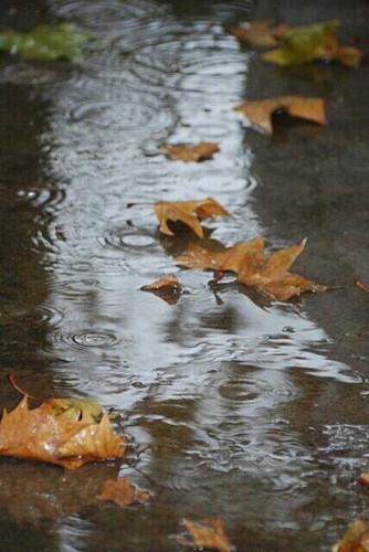 Открытки. Осень! Кленовые листья в луже