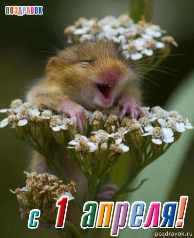 С Днем Смеха! <b>Зверюшка</b> смеется в цветах гифка анимация