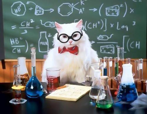 <b>С</b> <b>Днем</b> <b>Химика</b>! Кот <b>химик</b> разрабатывает красители гифка анимация