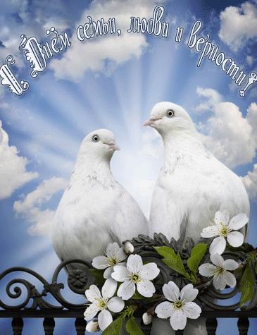 <b>С</b> <b>днем</b> <b>семьи</b>, <b>любви</b> и <b>верности</b>! Два голубя на цветущей ве... гифка анимация