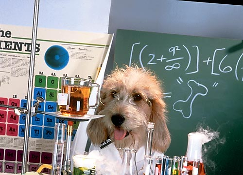 <b>С</b> <b>Днем</b> <b>Химика</b>! Песик-<b>химик</b> гифка анимация