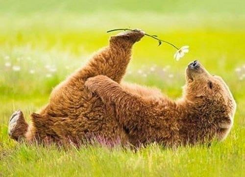 <b>С</b> первым днем лета! <b>Медвежонок</b> <b>с</b> ромашкой в лапе гифка анимация
