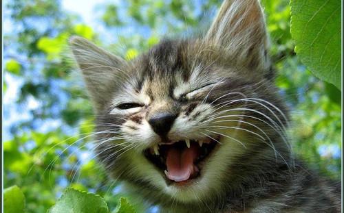Международный день улыбки. <b>Смеющийся</b> котенок гифка анимация